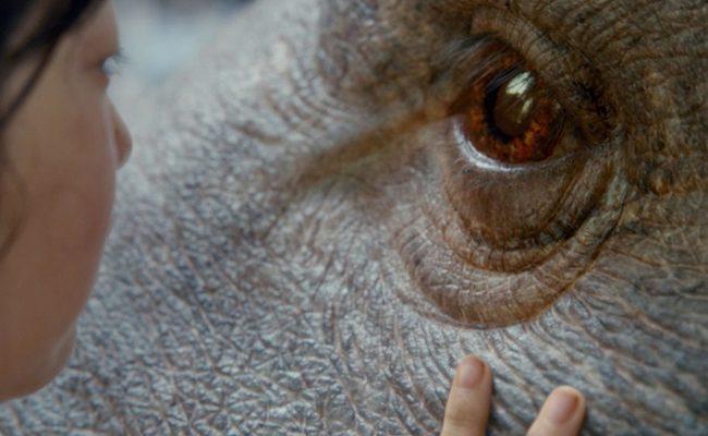 Netflix nos trae 'Okja' del visionario director Bong Joon Ho
